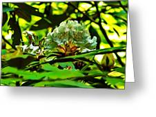 Flowers In The Woods Greeting Card