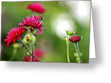 Flowers Intwined  Greeting Card