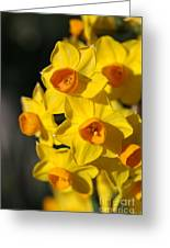 flowers-Jonquils-bright yellow Greeting Card
