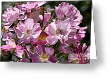 Flowers- Mass Roses Greeting Card