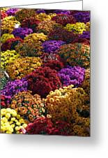 Flowers Near The Grand Palais Off Of Champ Elysees In Paris France   Greeting Card