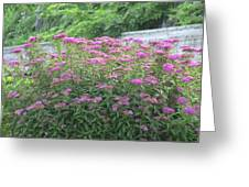 Flowers Of Boston Greeting Card