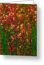 Flowers Of Fire Greeting Card
