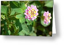 Flowers Of Pink And Orange Greeting Card