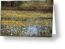 Flowers Of The Billabong Greeting Card