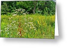 Flowers Of The Field Greeting Card