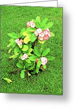 Flowers On Green Greeting Card