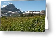 Flowers On Logan Pass Greeting Card
