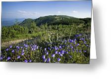 Flowers On Summer Mountain  Greeting Card