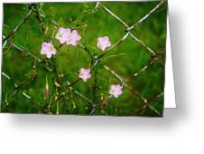 Flowers... On The Fence Greeting Card