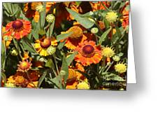 Flowers On The High Line Greeting Card