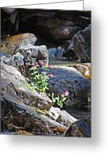 Flowers On The Rock Greeting Card