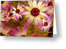 Flowers Pink And White Greeting Card