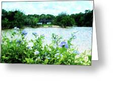 Flowers Point Of View Greeting Card