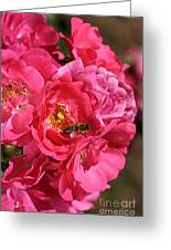Flowers-roses-pink-bee Greeting Card