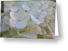 Snowball Flowers Greeting Card