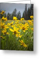 Flowers That Are Wild Greeting Card