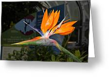 Flowers - Us Botanic Garden - 011311 Greeting Card