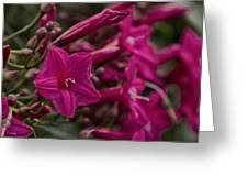 Flowers-waimea Arboretum  Greeting Card