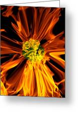 Flowery Flames Greeting Card