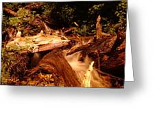 Flowing Betwixed Old Wood Near Mt St Helens Greeting Card