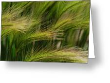 Flowing Grasses Greeting Card