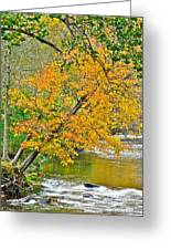 Flowing River Leaning Tree Greeting Card