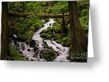 Flowing Stream In Spring Greeting Card