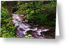 Flowing Through The Forest Greeting Card
