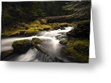 Flowing Waters - Olympic National Park Greeting Card
