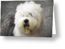 Fluff Face Greeting Card
