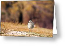Fluffball Watching Greeting Card by Anne Gilbert
