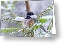 Fluffy Chickadee Greeting Card
