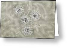 Fluffy Dandelions  Greeting Card