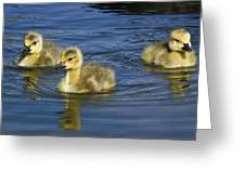 Fluffy Floaters  Greeting Card