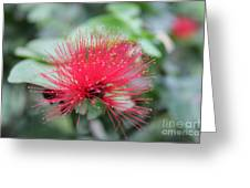Fluffy Pink Flower Greeting Card