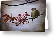 Fluffy Sparrow  Greeting Card