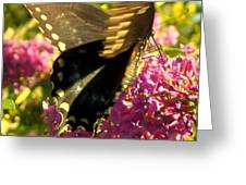Fluid Beauty Greeting Card