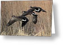 Fluid Migration Greeting Card