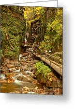 Flume Gorge At Franconia Notch Greeting Card