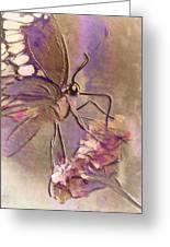 Fluorescent Butterfly Greeting Card by Jill Balsam