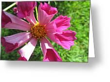 Fluted Petals Greeting Card