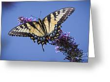 Fluted Swallowtail Greeting Card