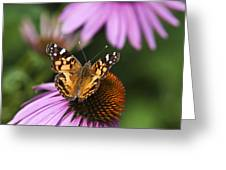 Fluttering Breeze Butterfly Greeting Card by Christina Rollo