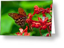 Fluttering Buttefly Greeting Card