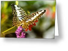 Fluttering Greeting Card
