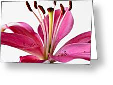 Fluttering Lily Greeting Card