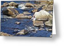 Fly Fishing On Mountain River Greeting Card