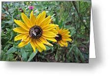 Fly On Rudbeckia Greeting Card