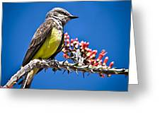 Flycatcher Greeting Card